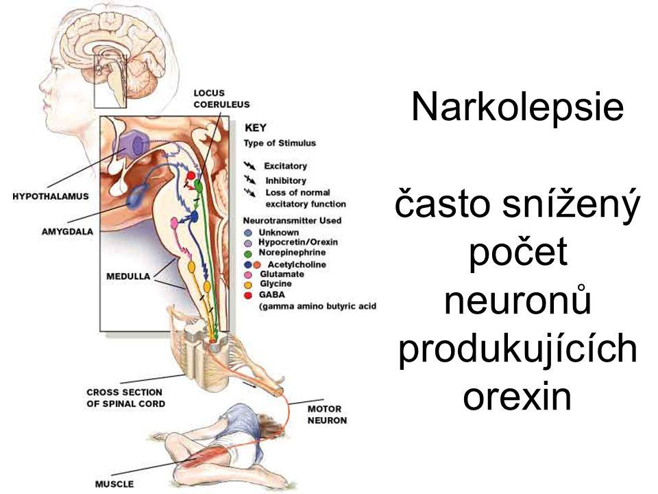 Narkolepsie často snížený počet neuronů produkujících orexin