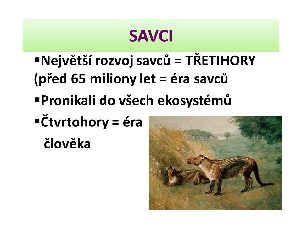 SAVCI Největší rozvoj savců = TŘETIHORY (před 65 miliony let = éra savců. Pronikali do všech ekosystémů.
