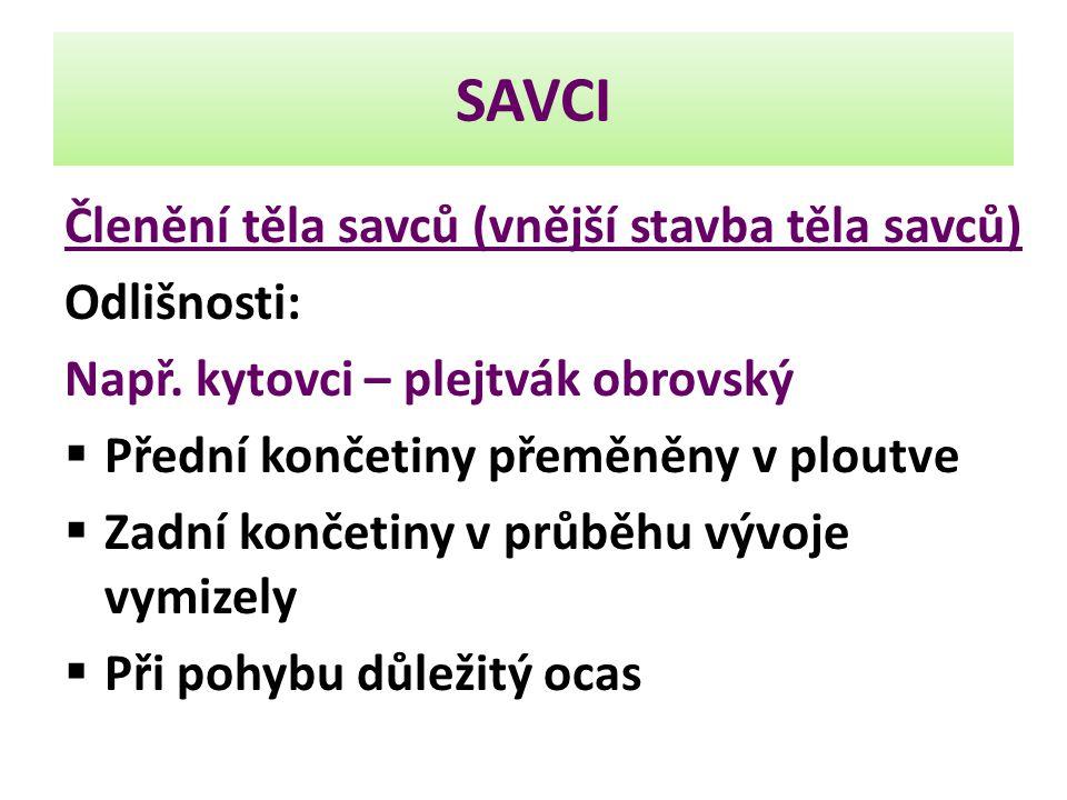 SAVCI Členění těla savců (vnější stavba těla savců) Odlišnosti: