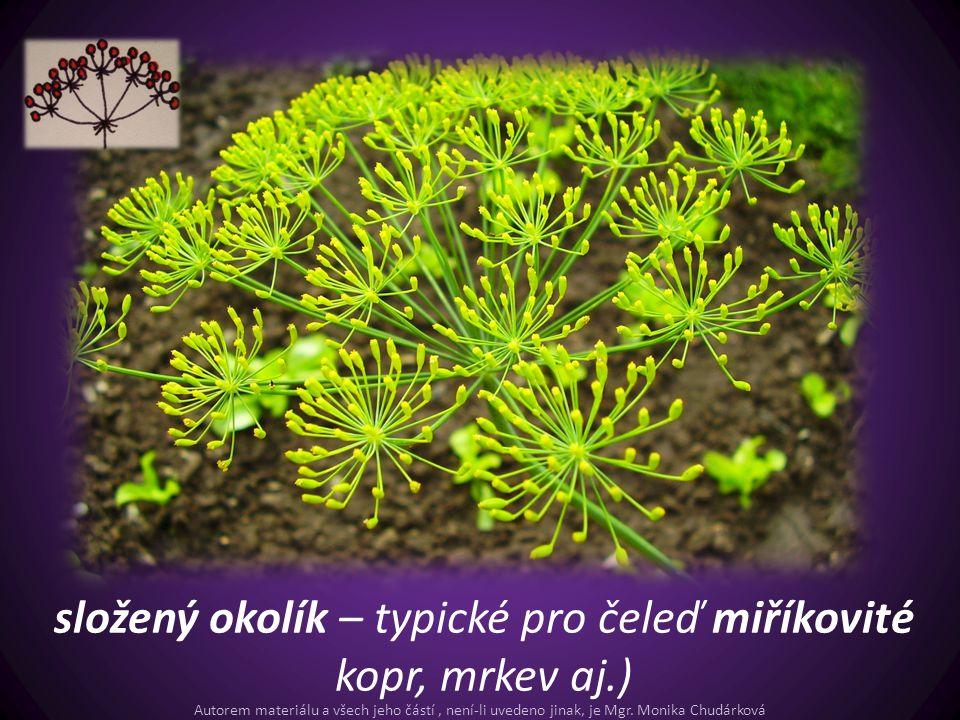 složený okolík – typické pro čeleď miříkovité kopr, mrkev aj.)