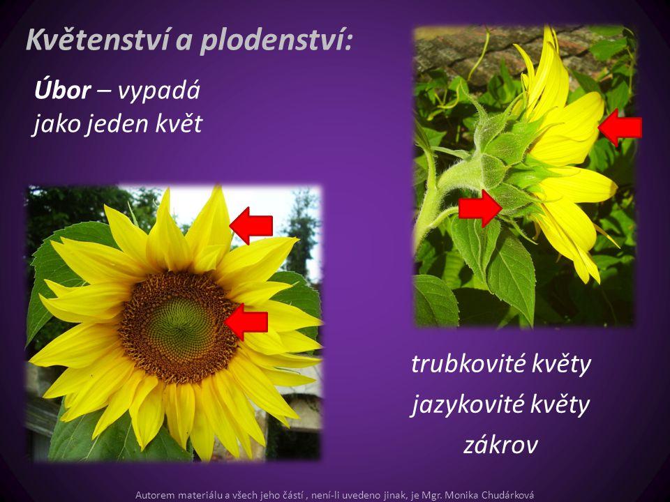 Květenství a plodenství: