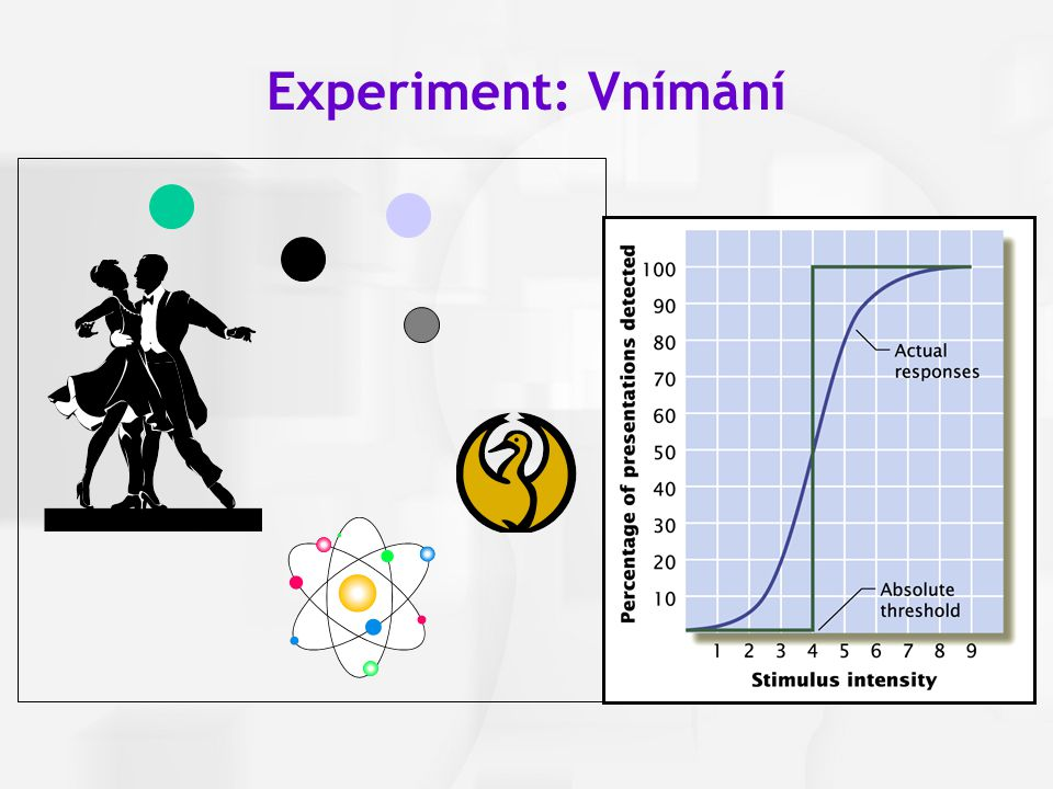 Experiment: Vnímání