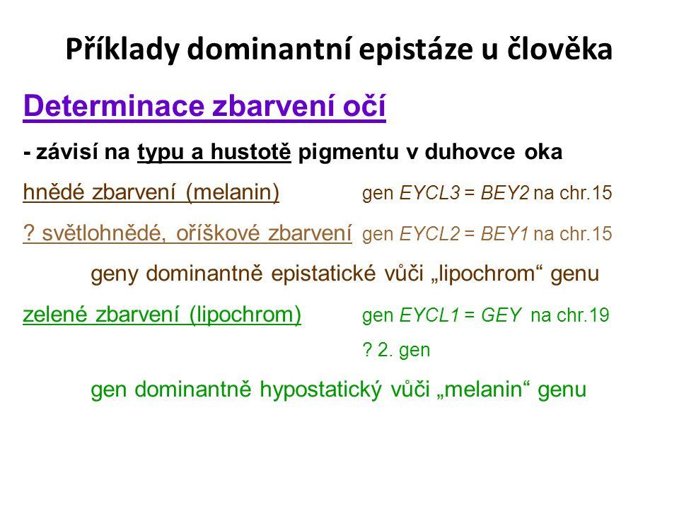 Příklady dominantní epistáze u člověka