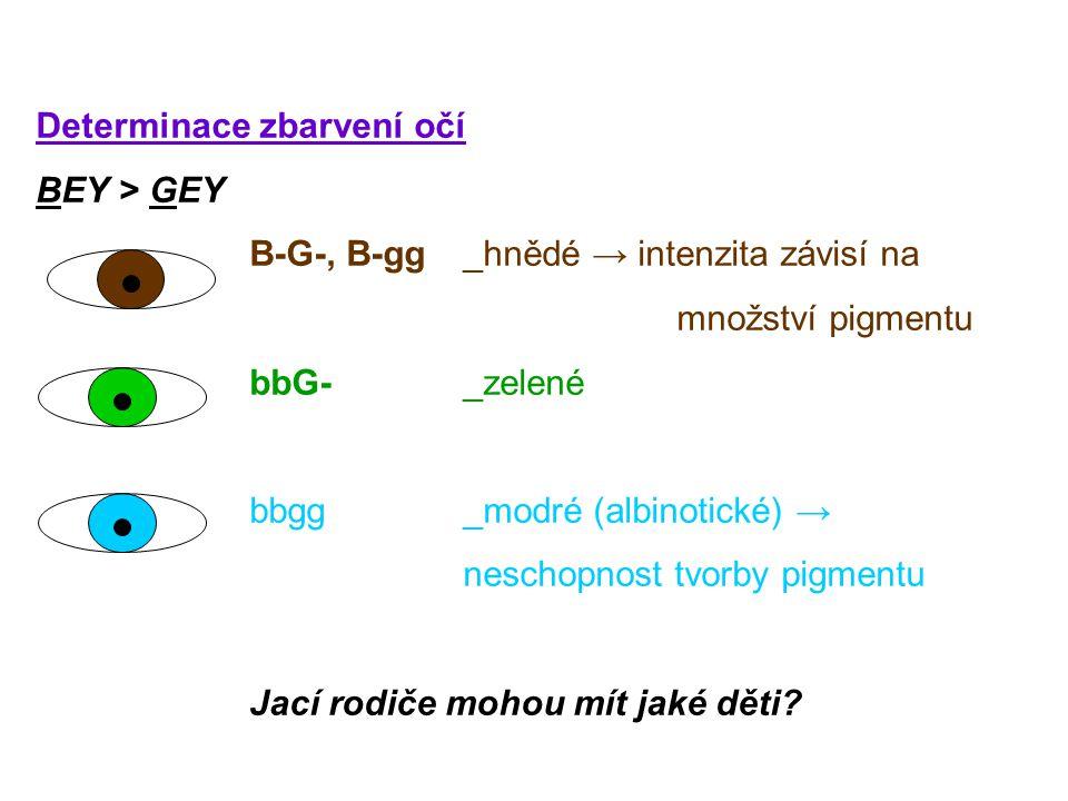 Determinace zbarvení očí BEY > GEY