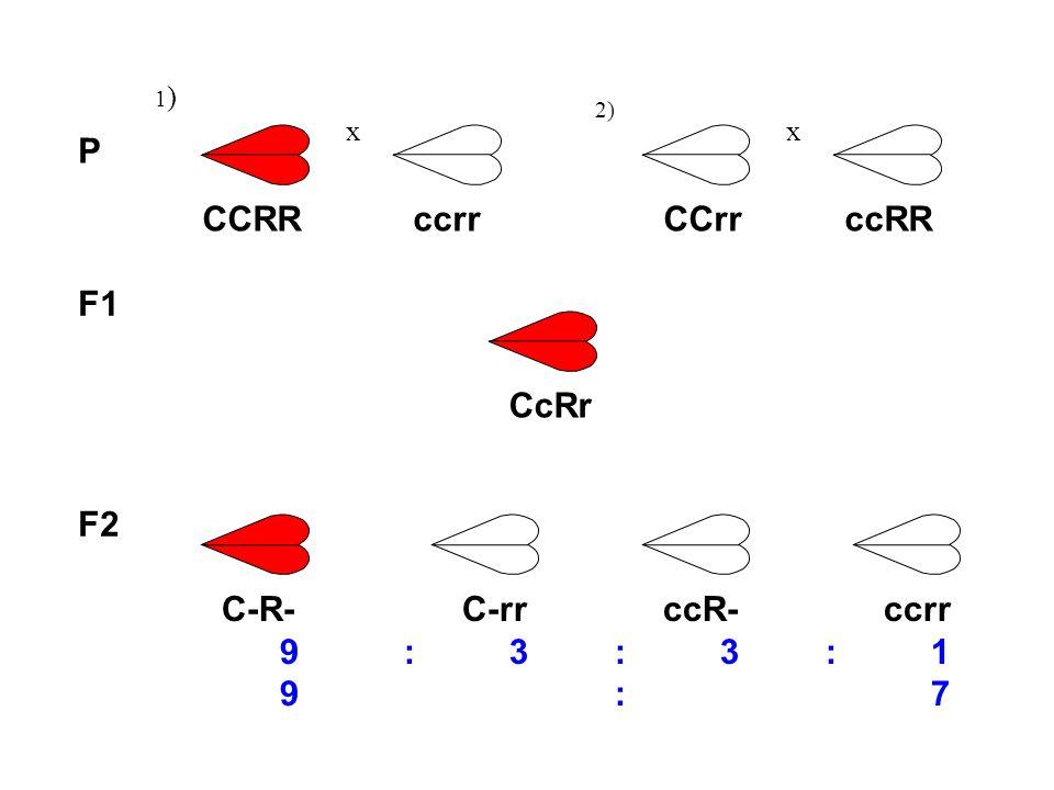 P CCRR ccrr CCrr ccRR F1 CcRr F2 C-R- C-rr ccR- ccrr 9 : 3 : 3 : 1
