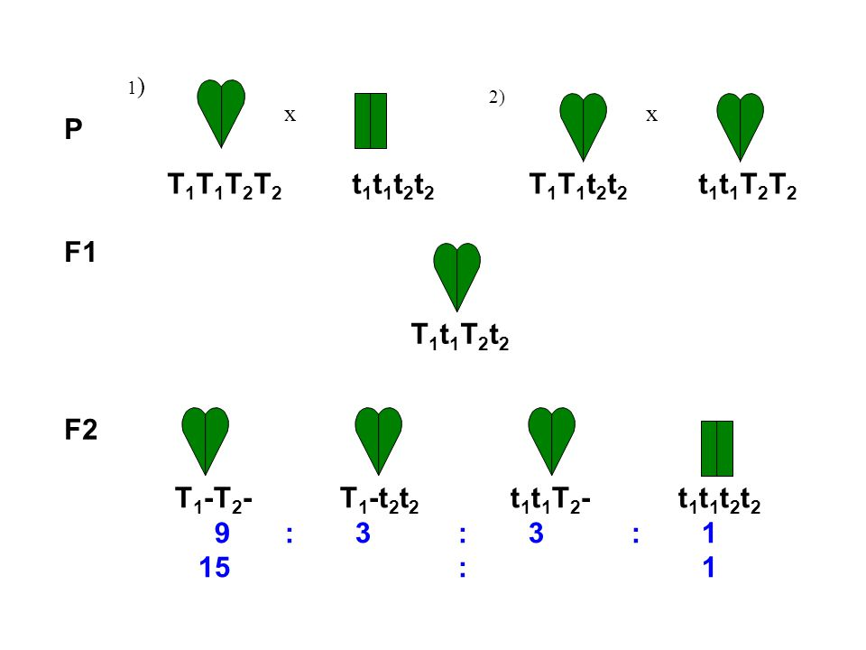 P T1T1T2T2 t1t1t2t2 T1T1t2t2 t1t1T2T2 F1 T1t1T2t2 F2
