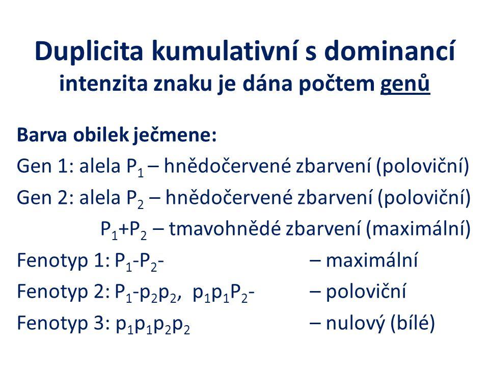 Duplicita kumulativní s dominancí intenzita znaku je dána počtem genů