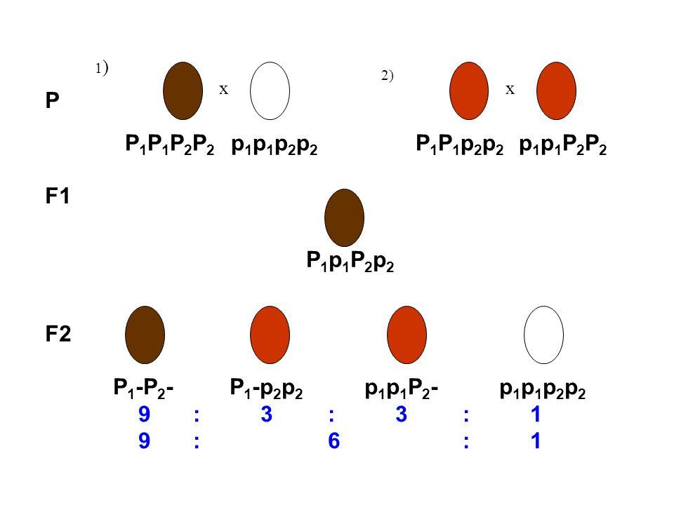 P P1P1P2P2 p1p1p2p2 P1P1p2p2 p1p1P2P2 F1 P1p1P2p2 F2