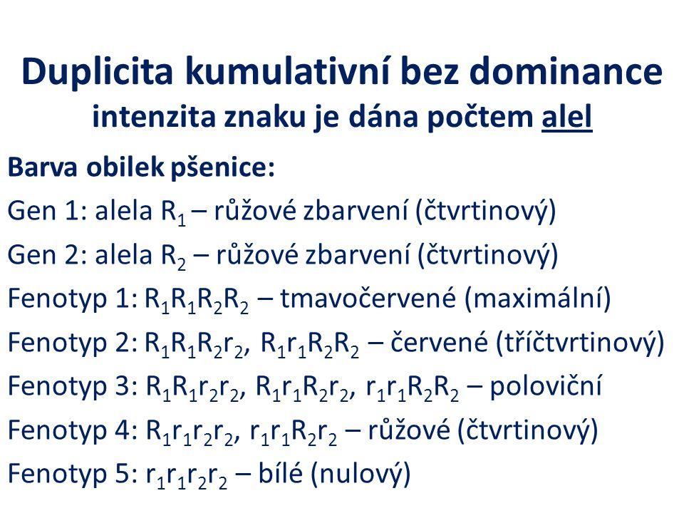 Duplicita kumulativní bez dominance intenzita znaku je dána počtem alel