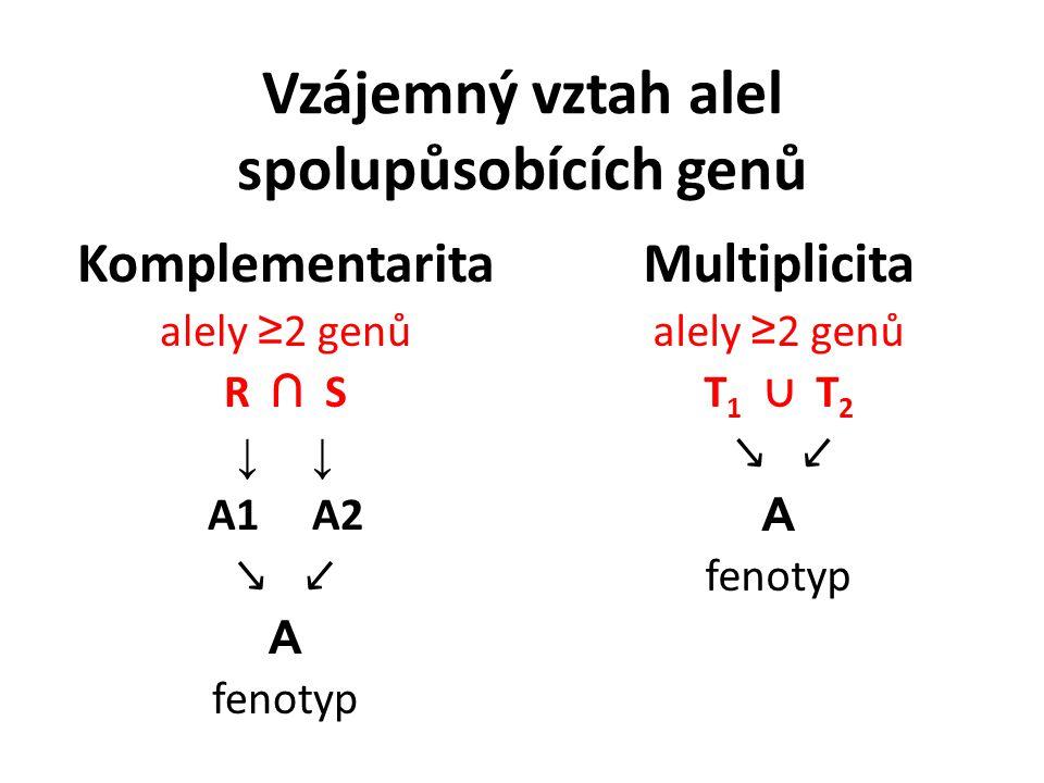 Vzájemný vztah alel spolupůsobících genů