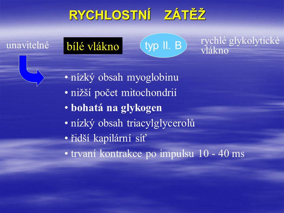 RYCHLOSTNÍ ZÁTĚŽ bílé vlákno typ II. B nízký obsah myoglobinu