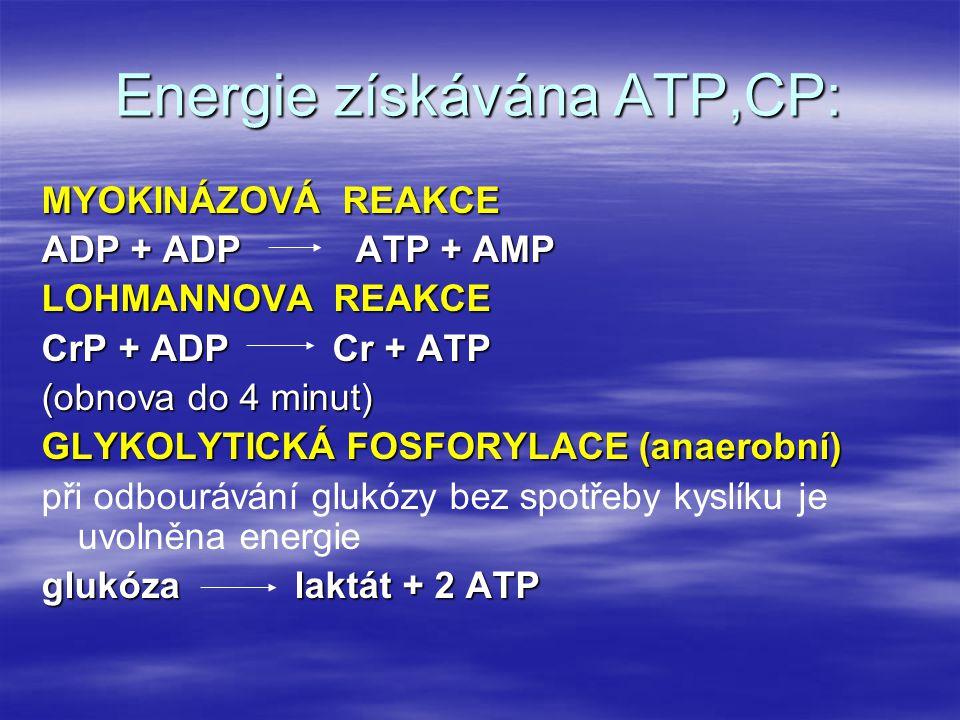 Energie získávána ATP,CP: