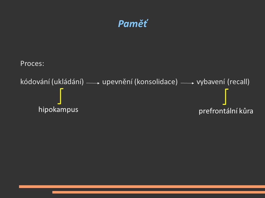 Paměť Proces: kódování (ukládání) upevnění (konsolidace) vybavení (recall) hipokampus.