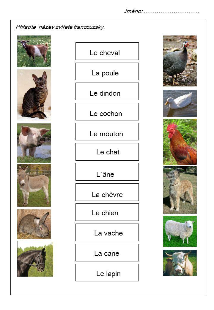 Le cheval La poule Le dindon Le cochon Le mouton Le chat L´âne