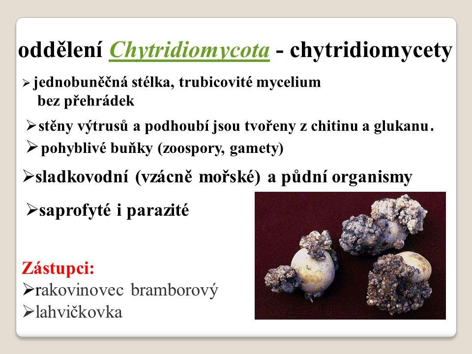 oddělení Chytridiomycota - chytridiomycety