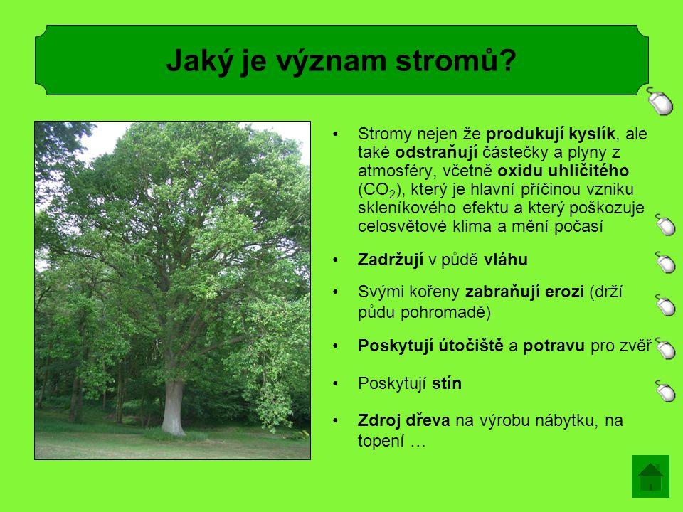 Jaký je význam stromů