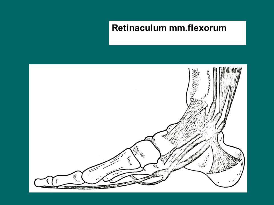 Retinaculum mm.flexorum