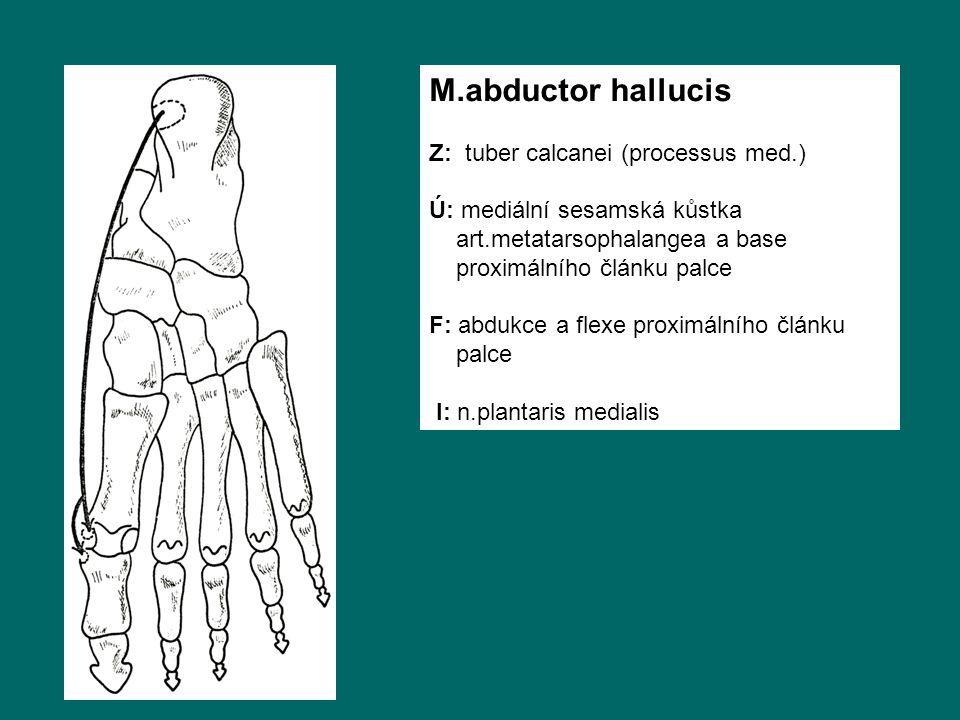M.abductor hallucis Z: tuber calcanei (processus med.)