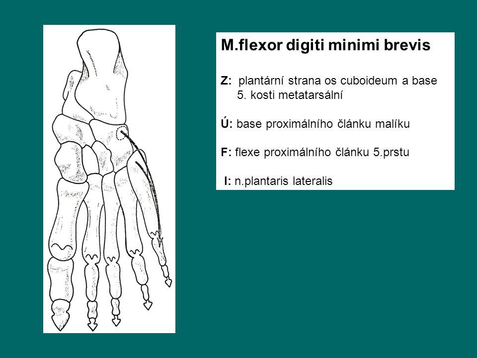 M.flexor digiti minimi brevis