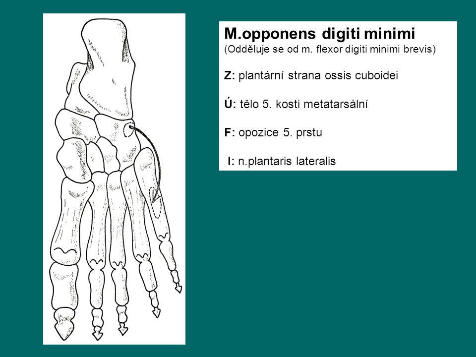 M.opponens digiti minimi