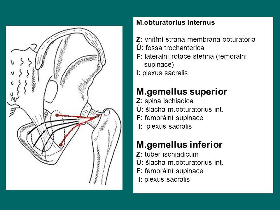 M.gemellus superior M.gemellus inferior M.obturatorius internus