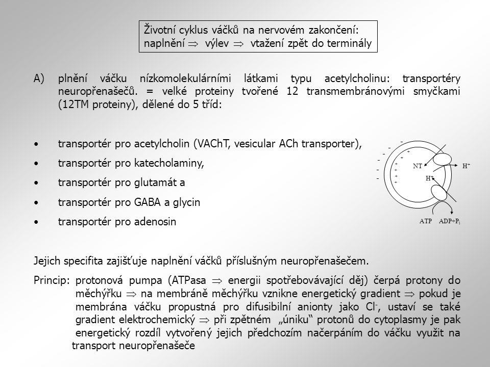 transportér pro acetylcholin (VAChT, vesicular ACh transporter),