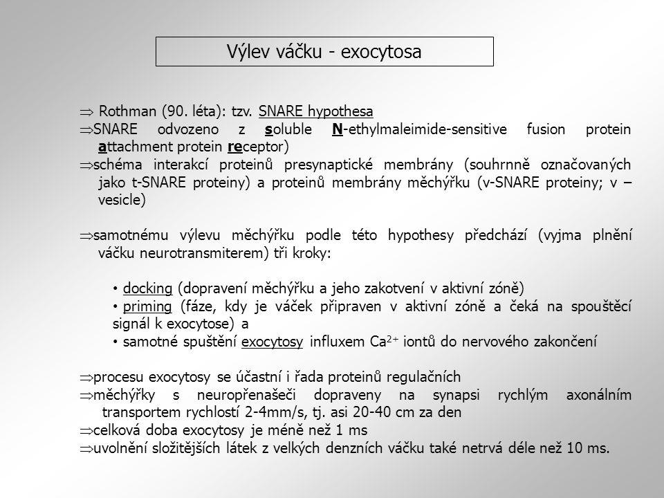 Výlev váčku - exocytosa