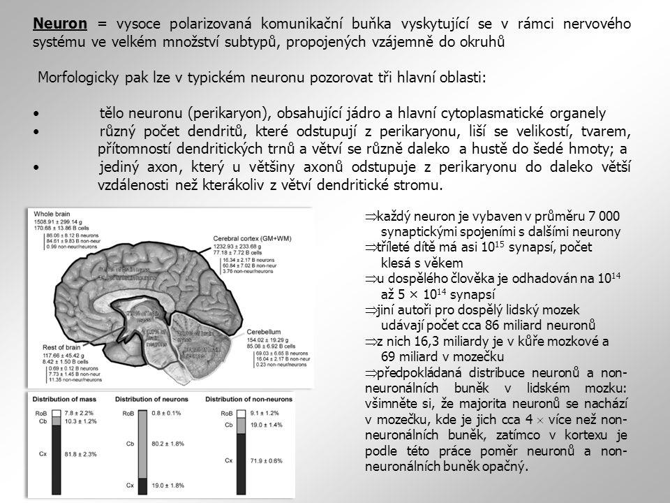 Morfologicky pak lze v typickém neuronu pozorovat tři hlavní oblasti: