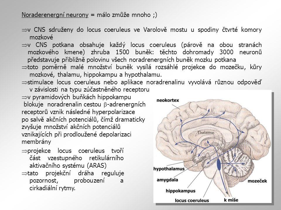 Noraderenergní neurony = málo zmůže mnoho ;)