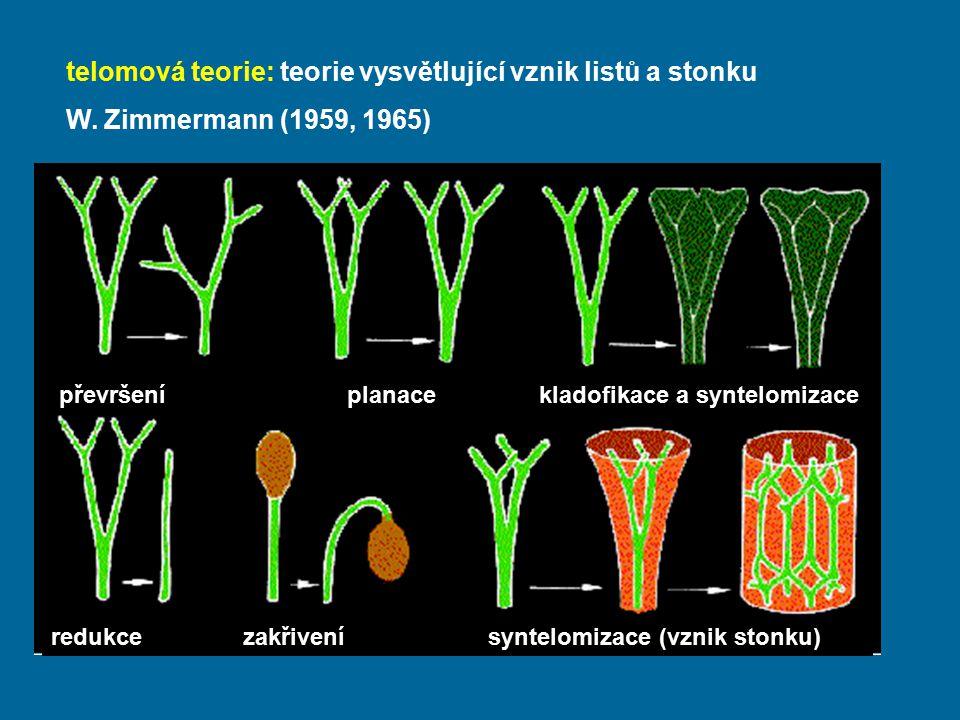 telomová teorie: teorie vysvětlující vznik listů a stonku