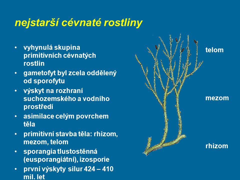 nejstarší cévnaté rostliny