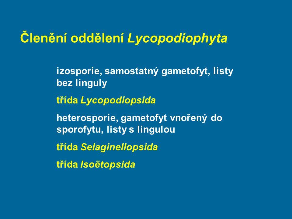 Členění oddělení Lycopodiophyta