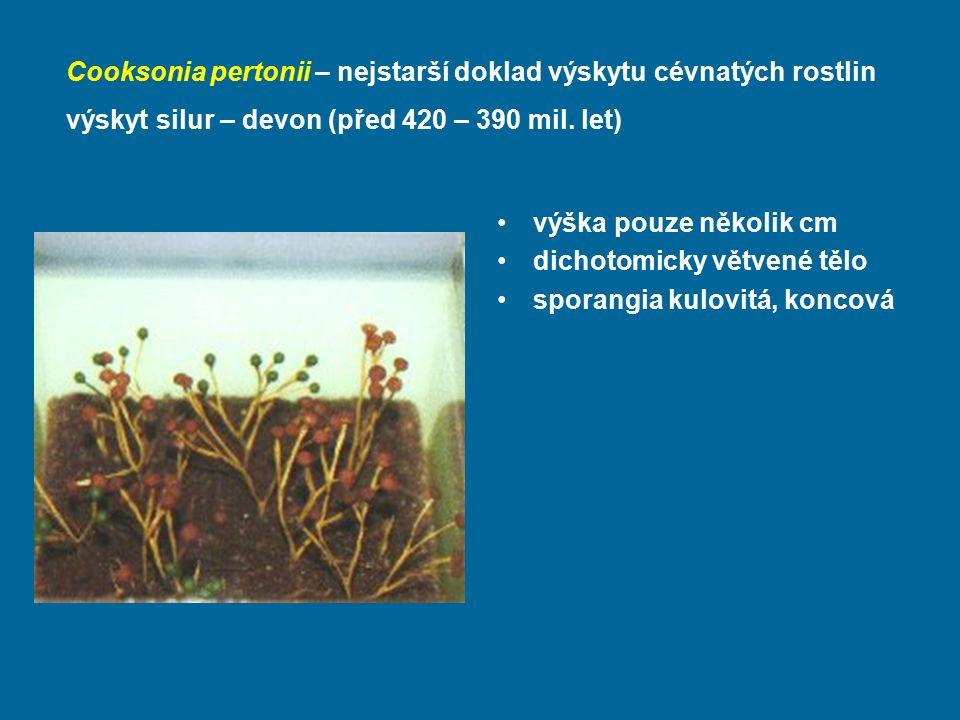 Cooksonia pertonii – nejstarší doklad výskytu cévnatých rostlin