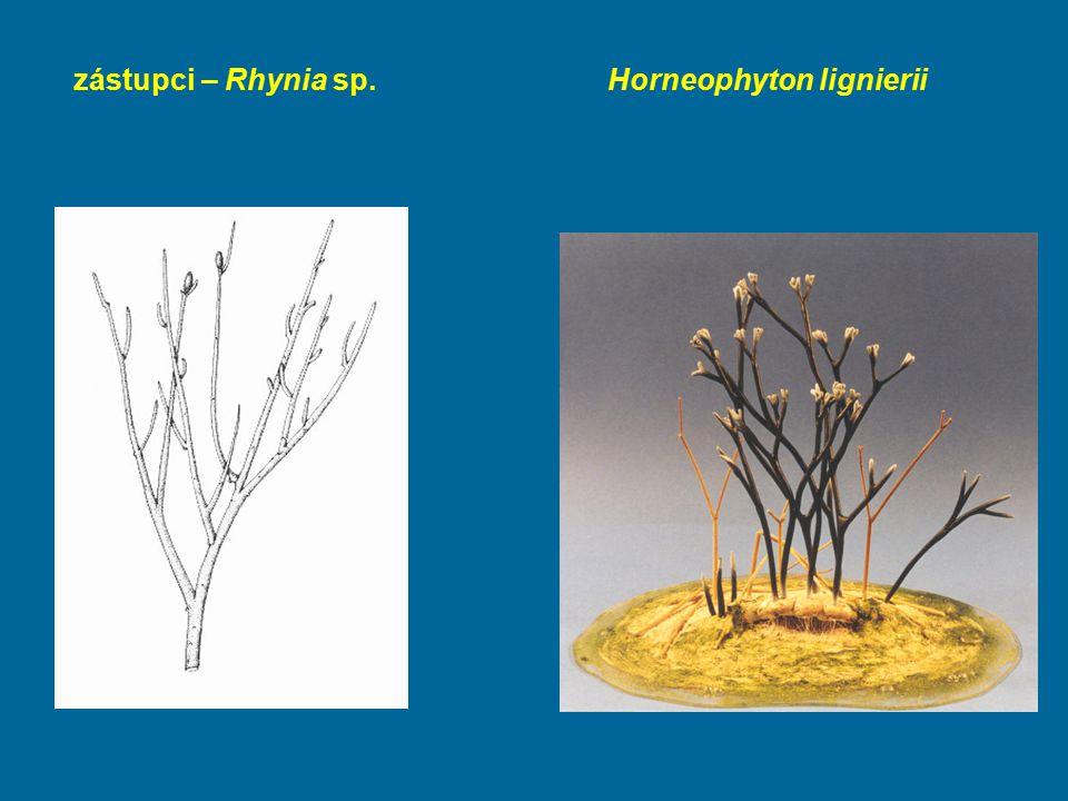 zástupci – Rhynia sp. Horneophyton lignierii
