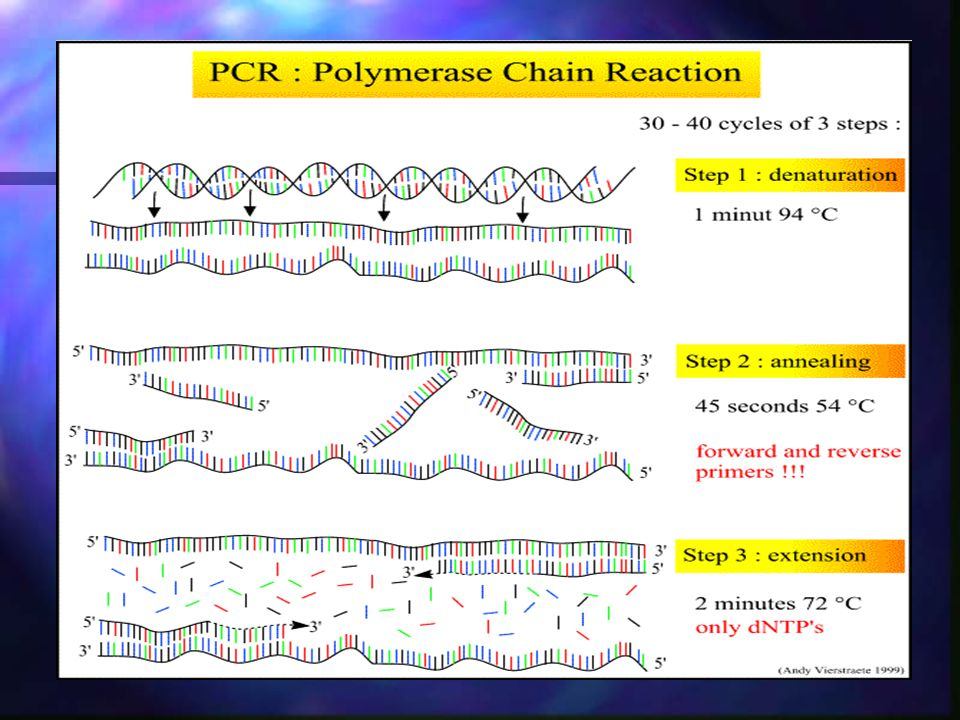 Why this name – PCR