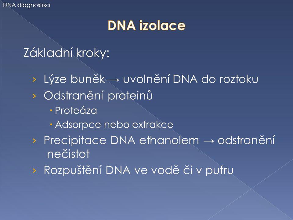 DNA izolace Základní kroky: Lýze buněk → uvolnění DNA do roztoku