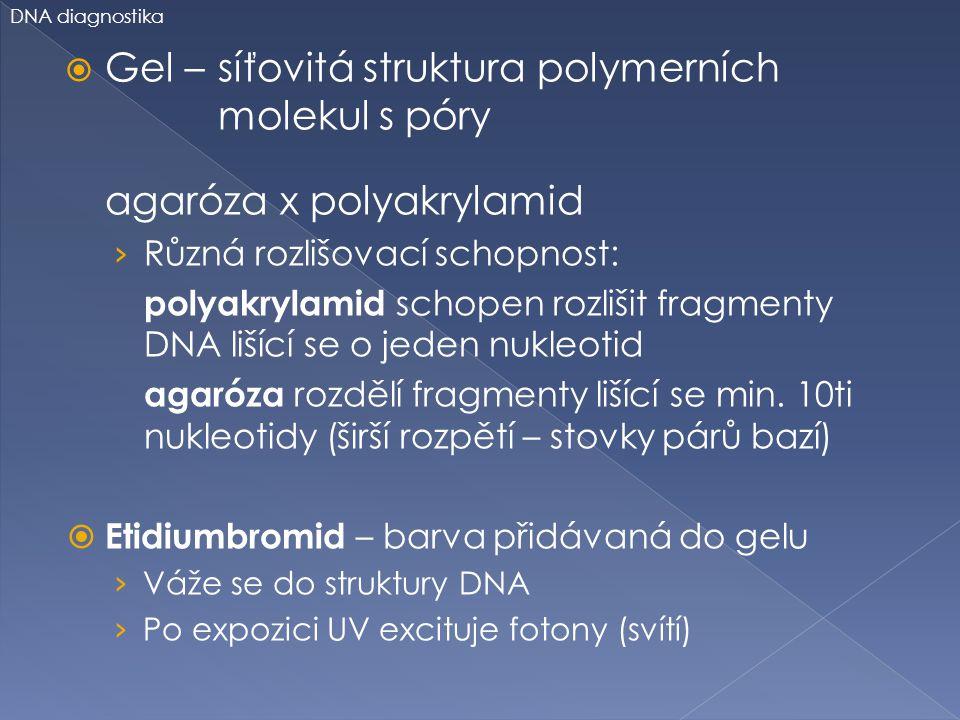 Gel – síťovitá struktura polymerních molekul s póry