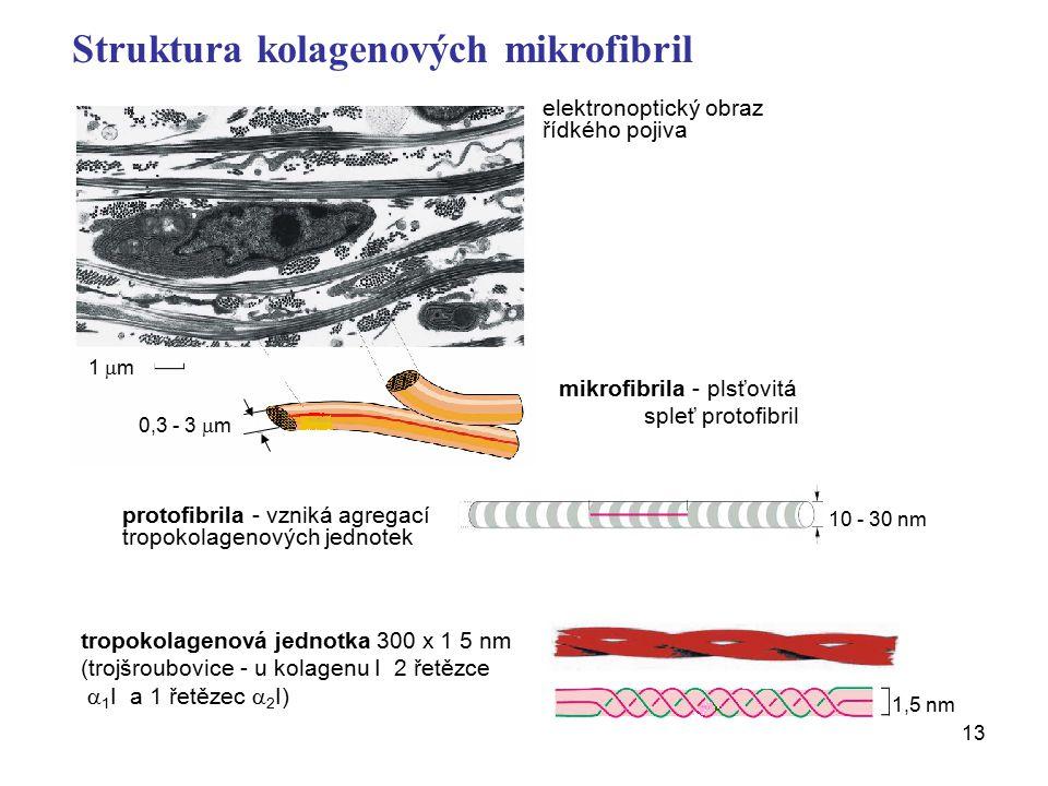 Struktura kolagenových mikrofibril
