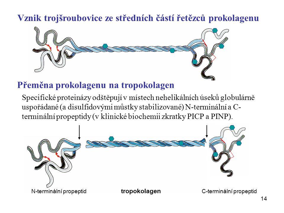 Vznik trojšroubovice ze středních částí řetězců prokolagenu