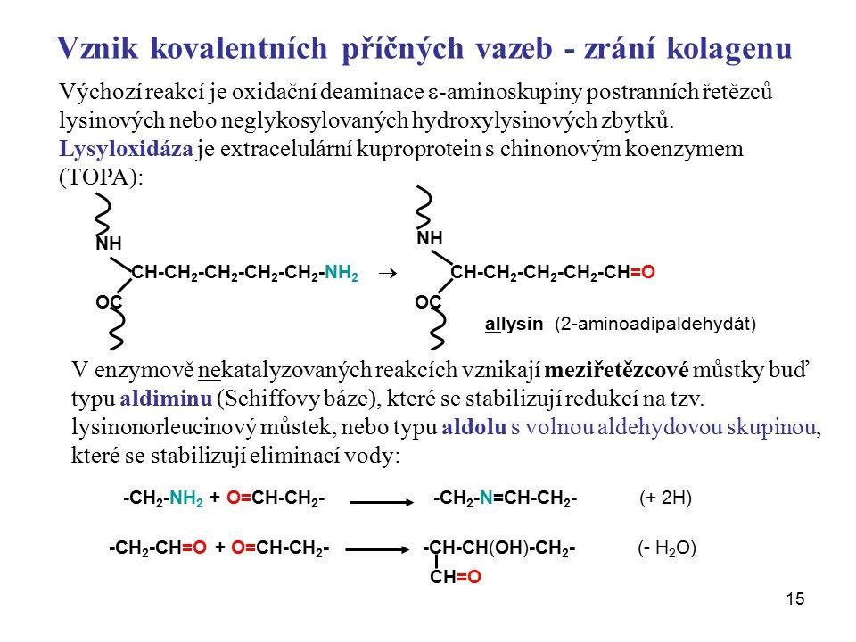 Vznik kovalentních příčných vazeb - zrání kolagenu
