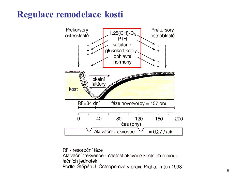 Regulace remodelace kosti