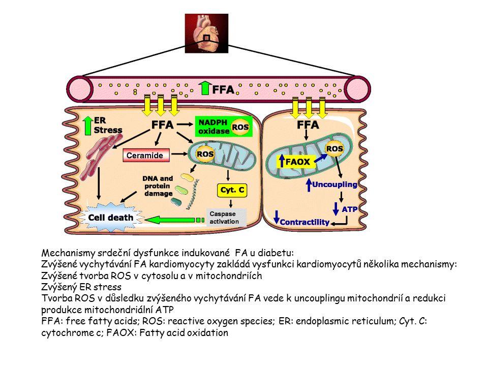 Mechanismy srdeční dysfunkce indukované FA u diabetu: