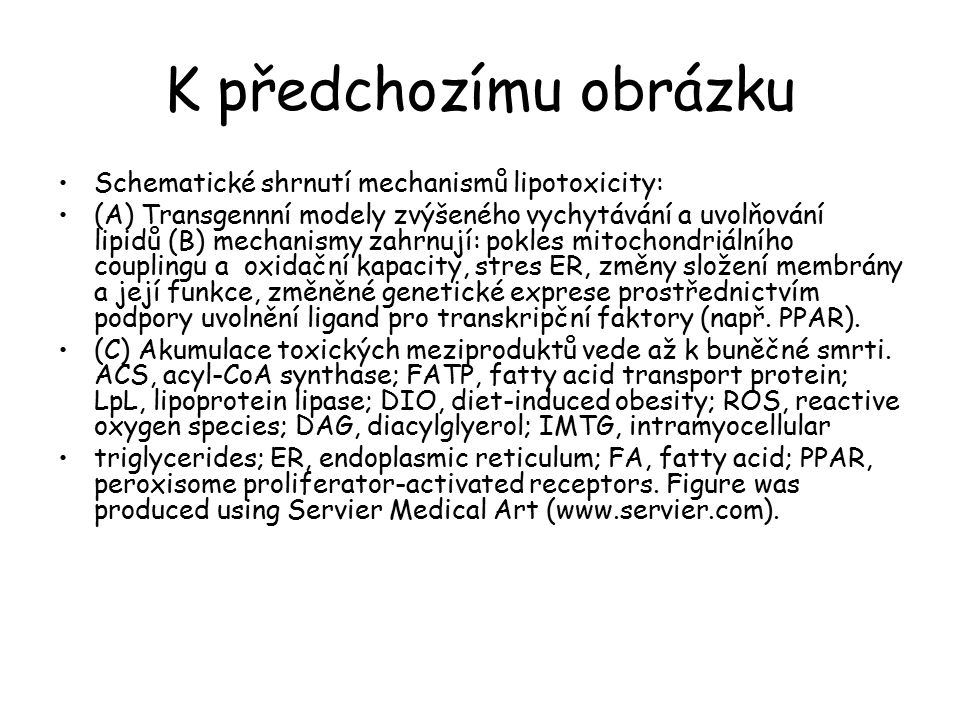 K předchozímu obrázku Schematické shrnutí mechanismů lipotoxicity: