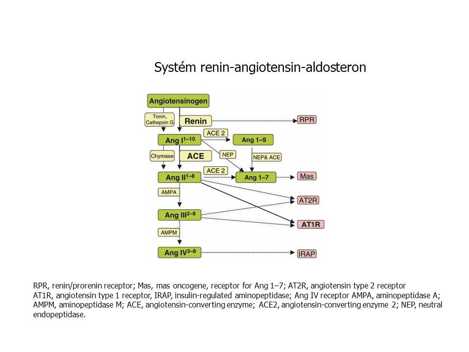 Systém renin-angiotensin-aldosteron