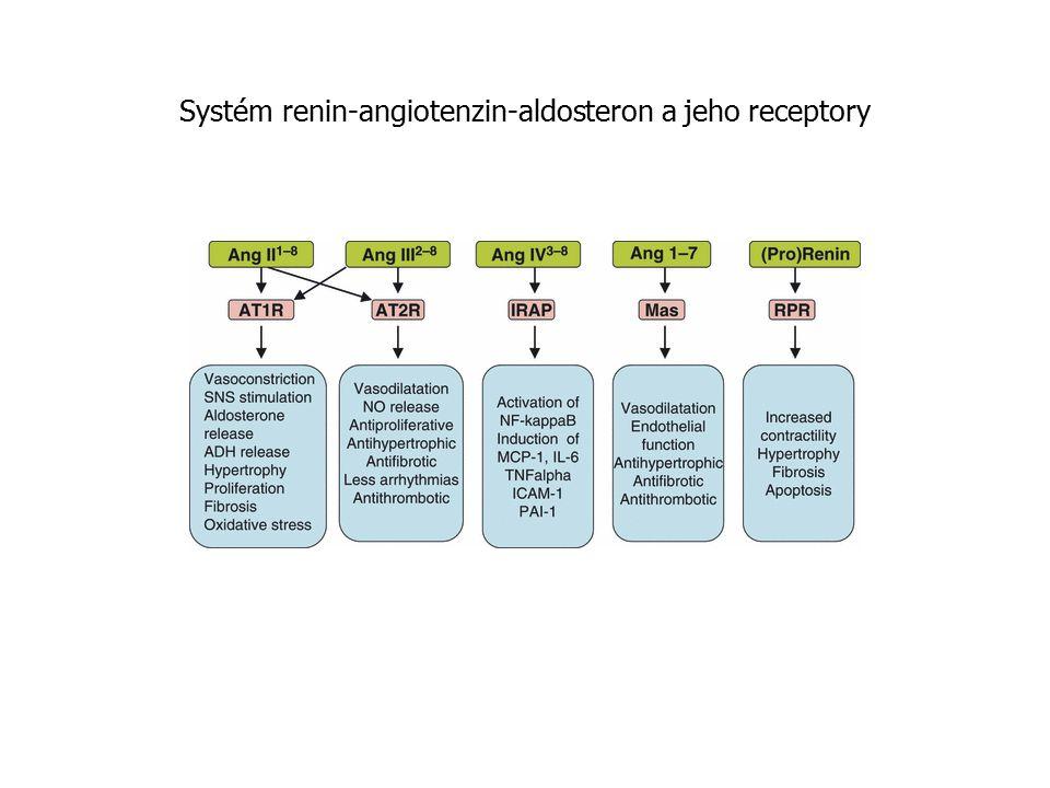 Systém renin-angiotenzin-aldosteron a jeho receptory