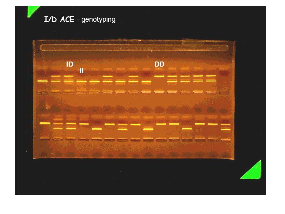 I/D ACE - genotyping ID DD II