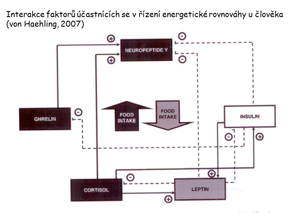 Interakce faktorů účastnících se v řízení energetické rovnováhy u člověka