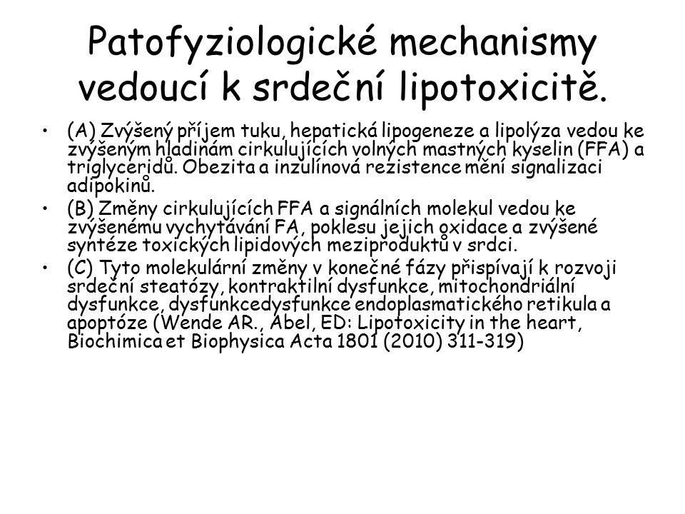 Patofyziologické mechanismy vedoucí k srdeční lipotoxicitě.