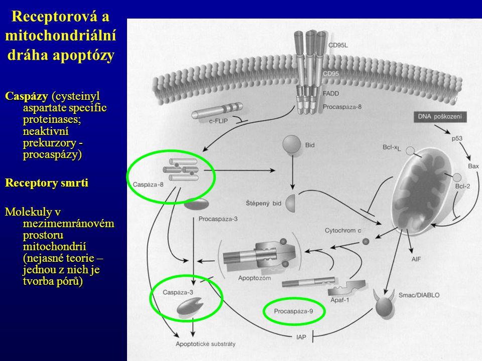 Receptorová a mitochondriální dráha apoptózy