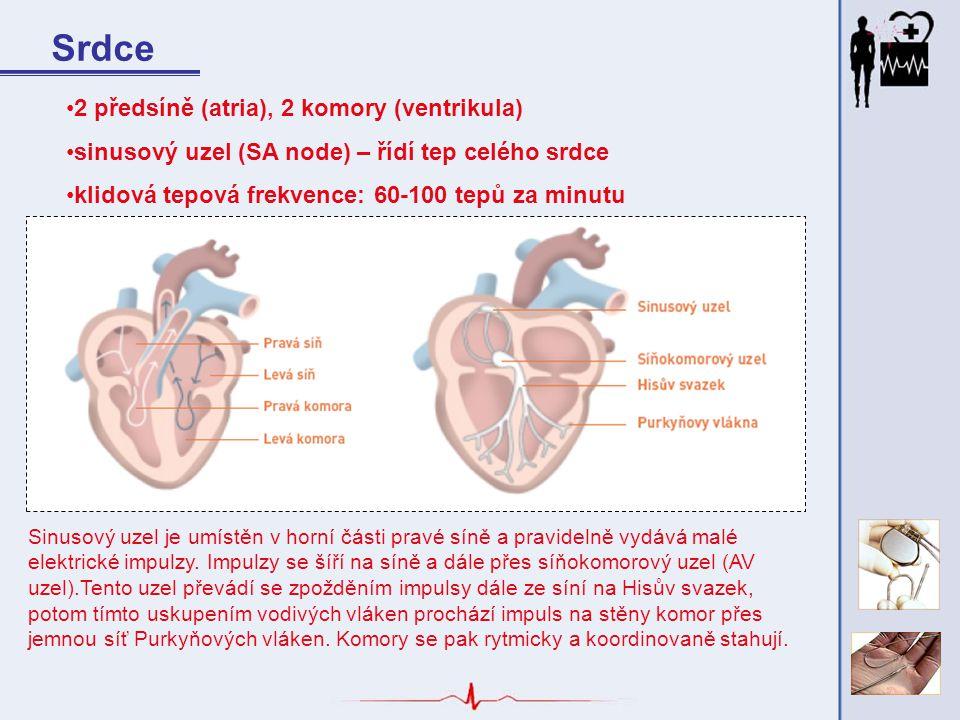 Srdce 2 předsíně (atria), 2 komory (ventrikula)